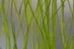 Lastra in eco-resina con materiali organici mm.4 Cod. DN06/D0026