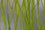 Lastra in eco-resina con materiali organici mm.6